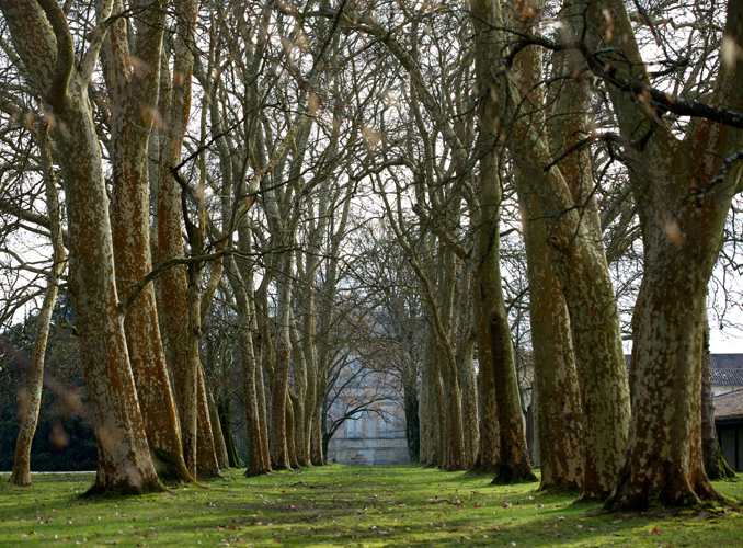 <p>The pathway of plane trees leading to the mansion.</p>