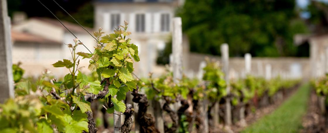 Le vignoble de Château d'Armailhac